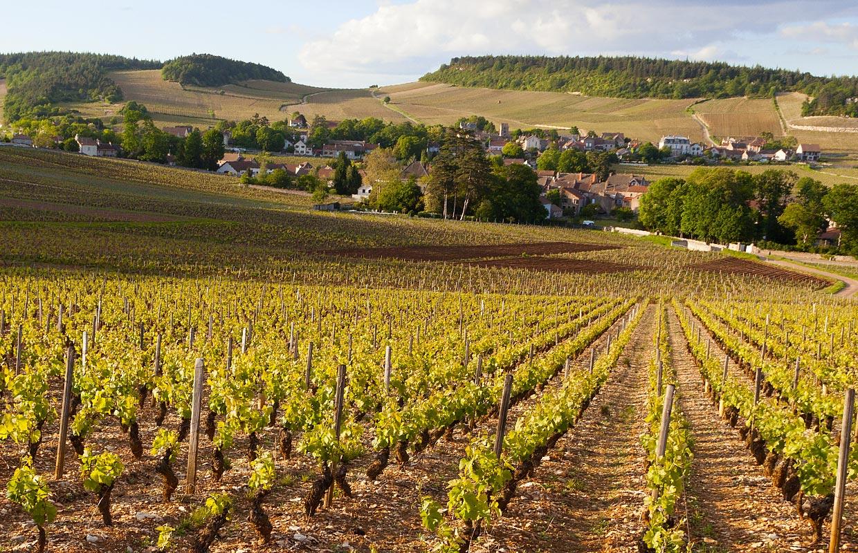 Visitez la Bourgogne