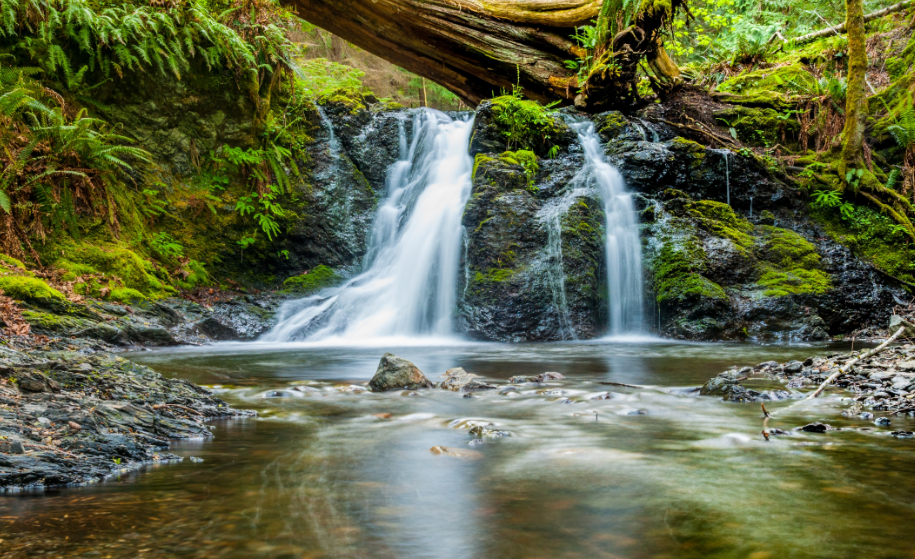 Petite cascade et torrent en pleine forêt